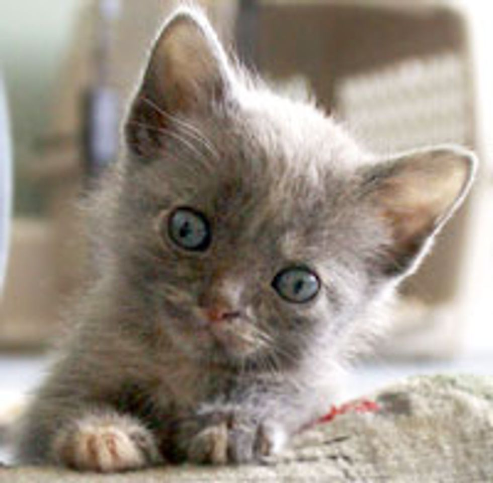 Beulah the Kitty Small in Size but Big in Heart