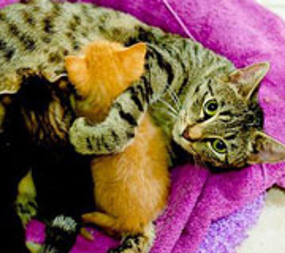 12 Rescue Mama Cat Stories
