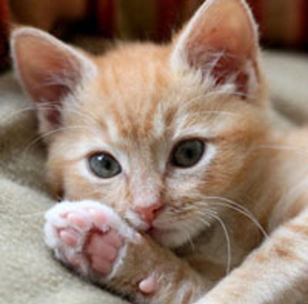 Oliver the Little Ginger Fighter