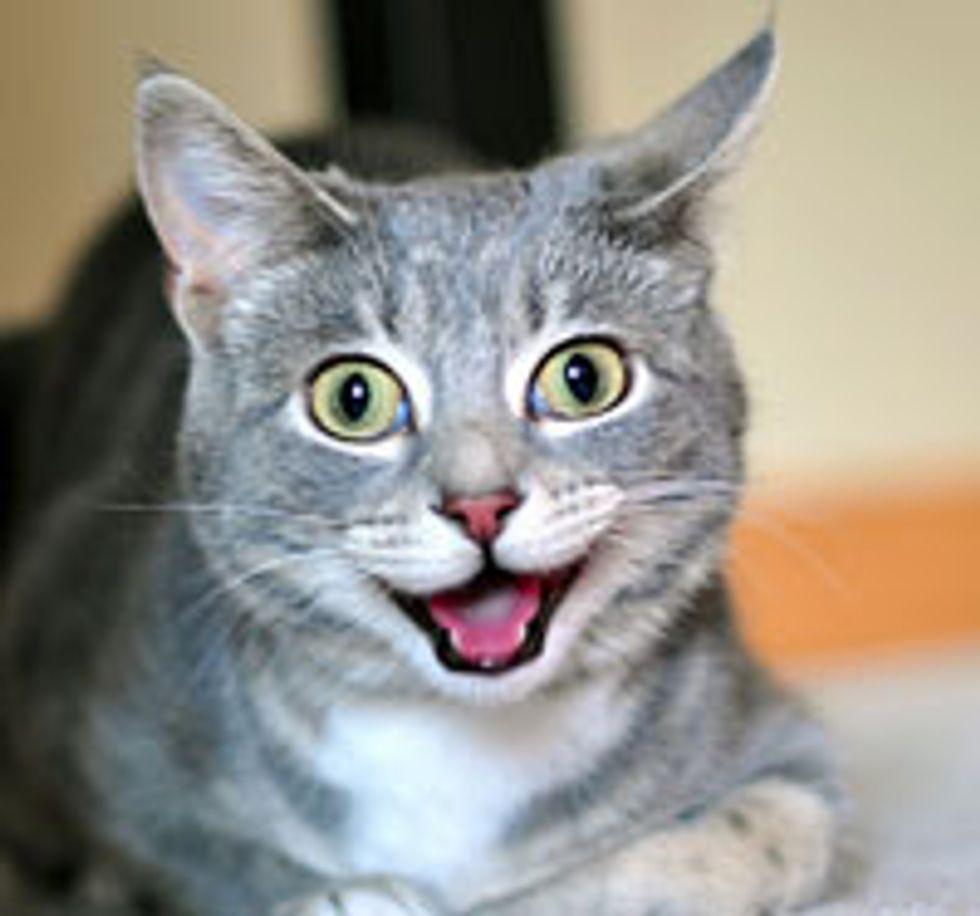 Hyper Kitty