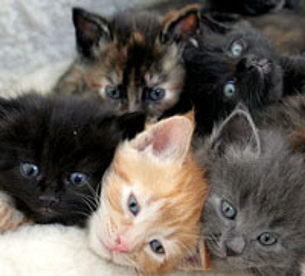 Stray Mama Cat and Her 7 Fuzzballs