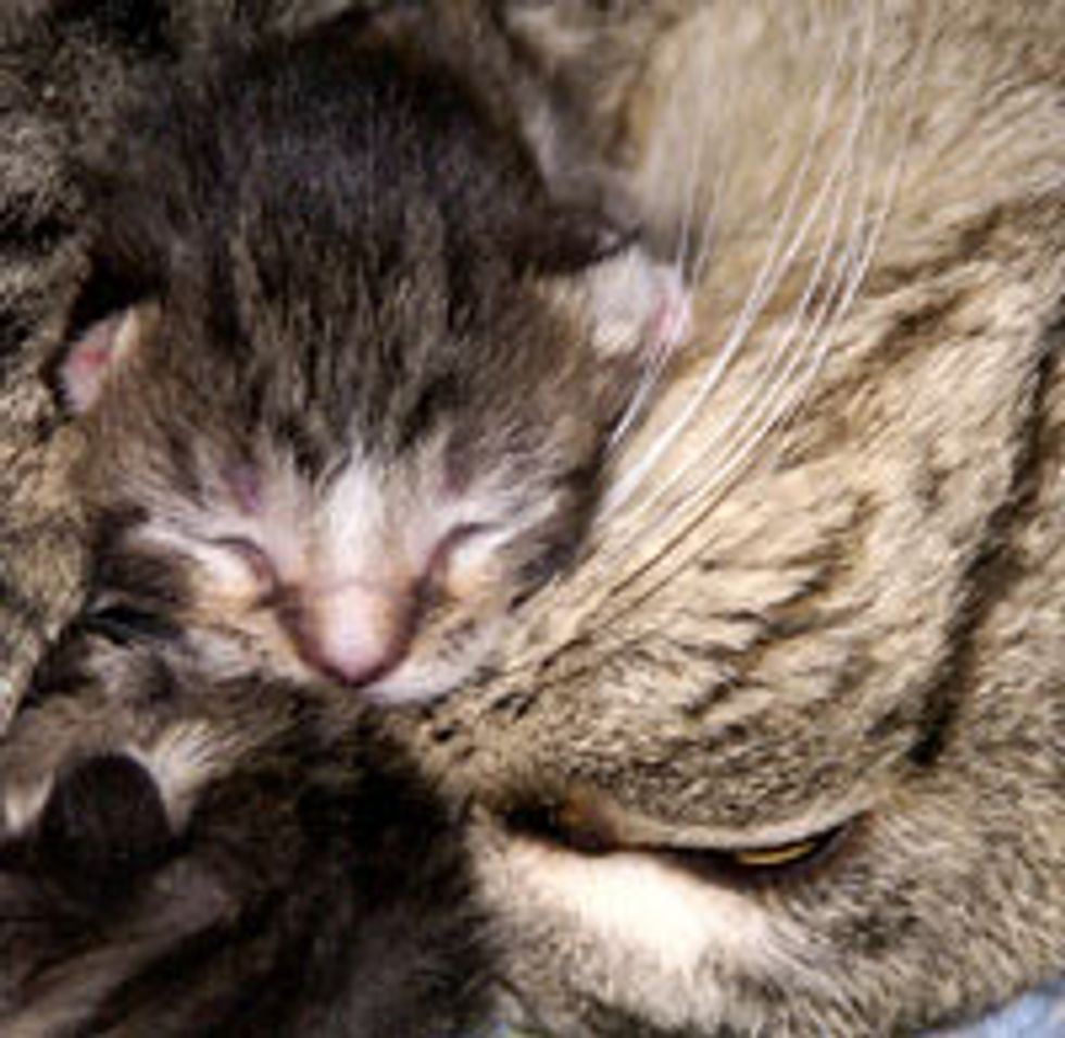 Maggie the Rescue Mama Cat & Her 6 Kittens