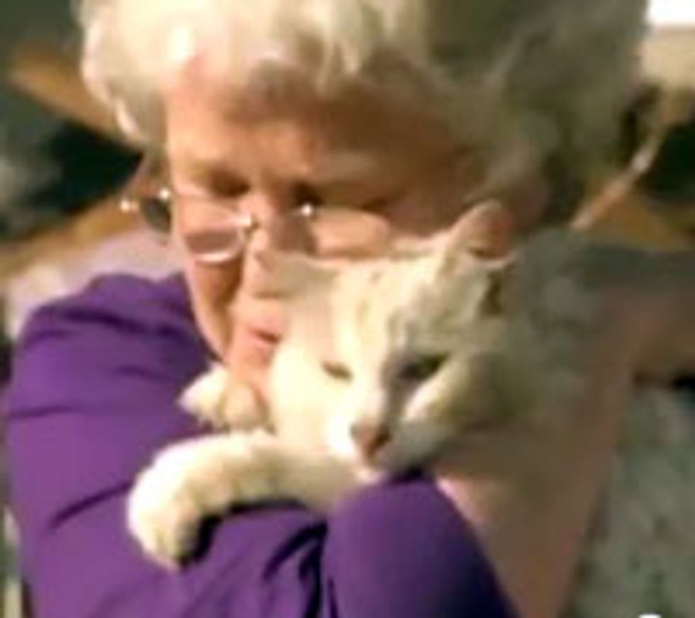 Missing Cat Shows Up During TV Interview Weeks After Tornado