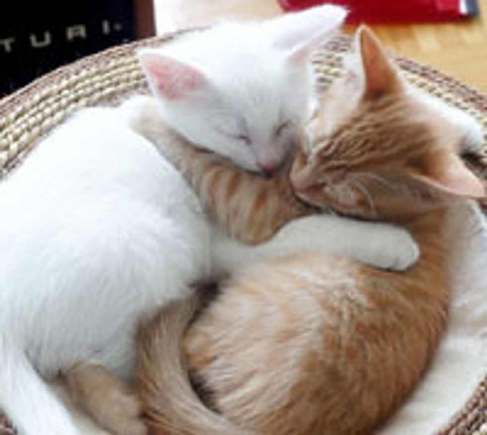 Casper and Tigger Adopted Together