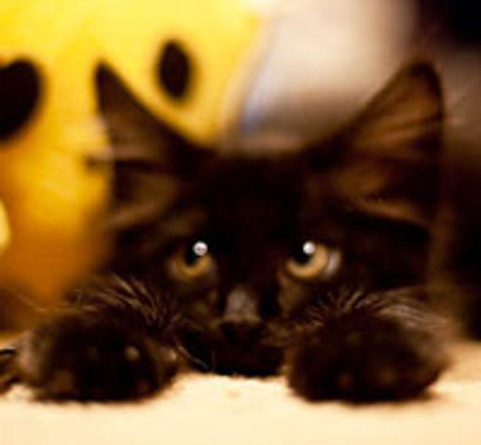 Little Black Rescue Orion - Pure Love