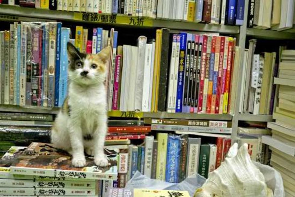 Stray Cats Find Home in a Bookstore in Hong Kong