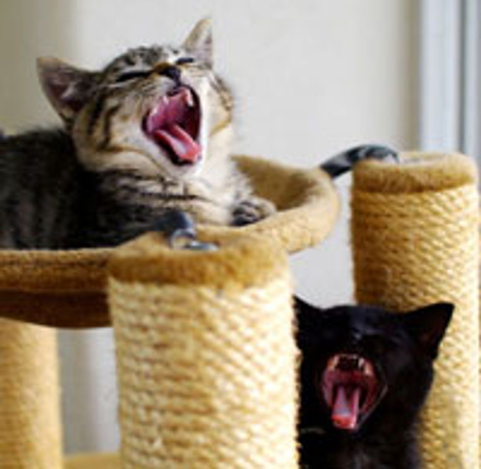 Two Rescue Kittens Given New Hope