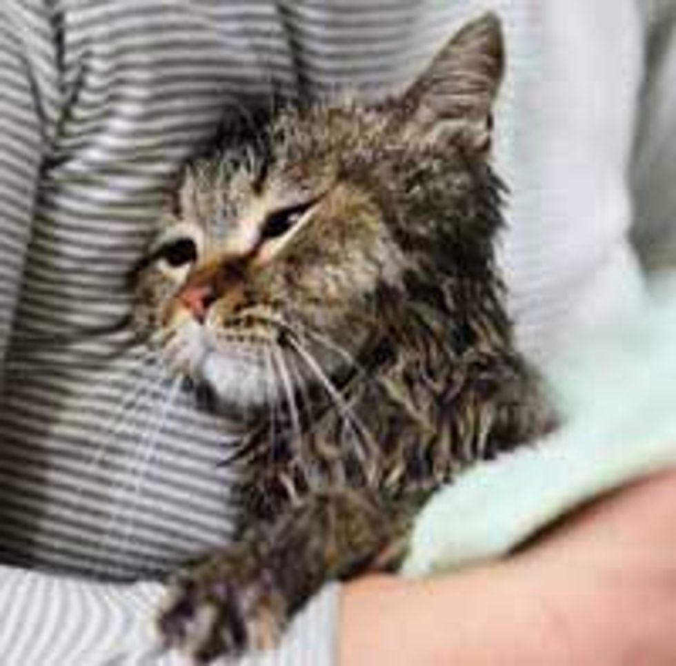Cat Strays into Family's Hearts