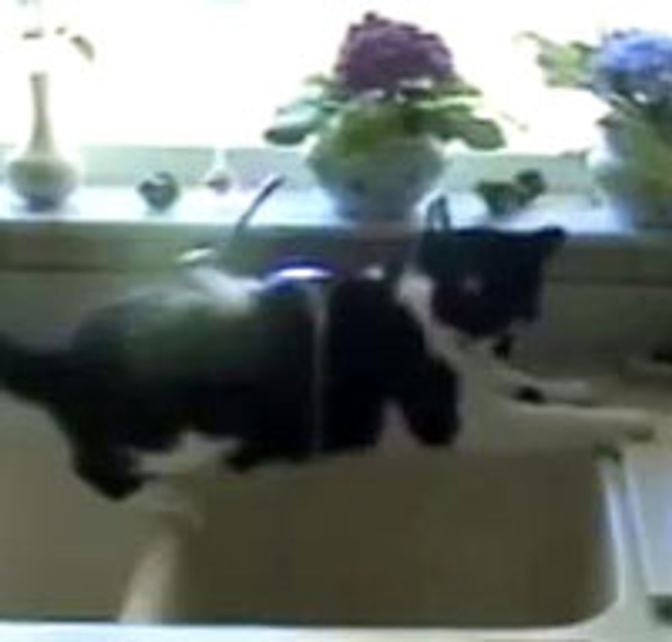 Kitty Taking a Shower
