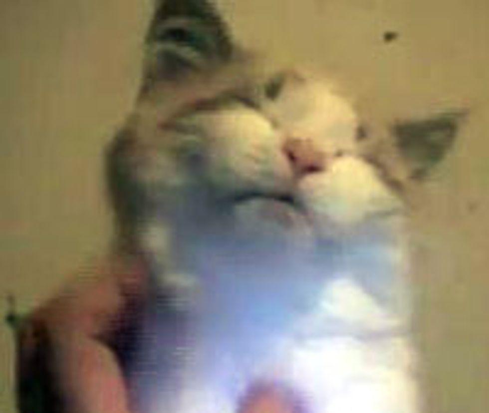 Kitten Demands More Petting!