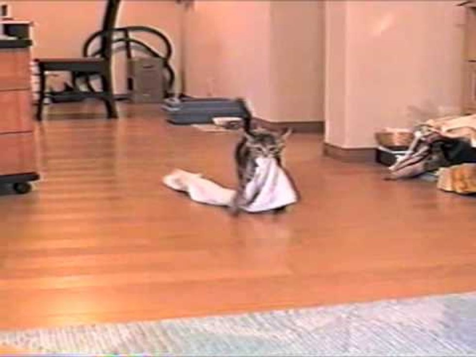 Kitty Fetches Towel