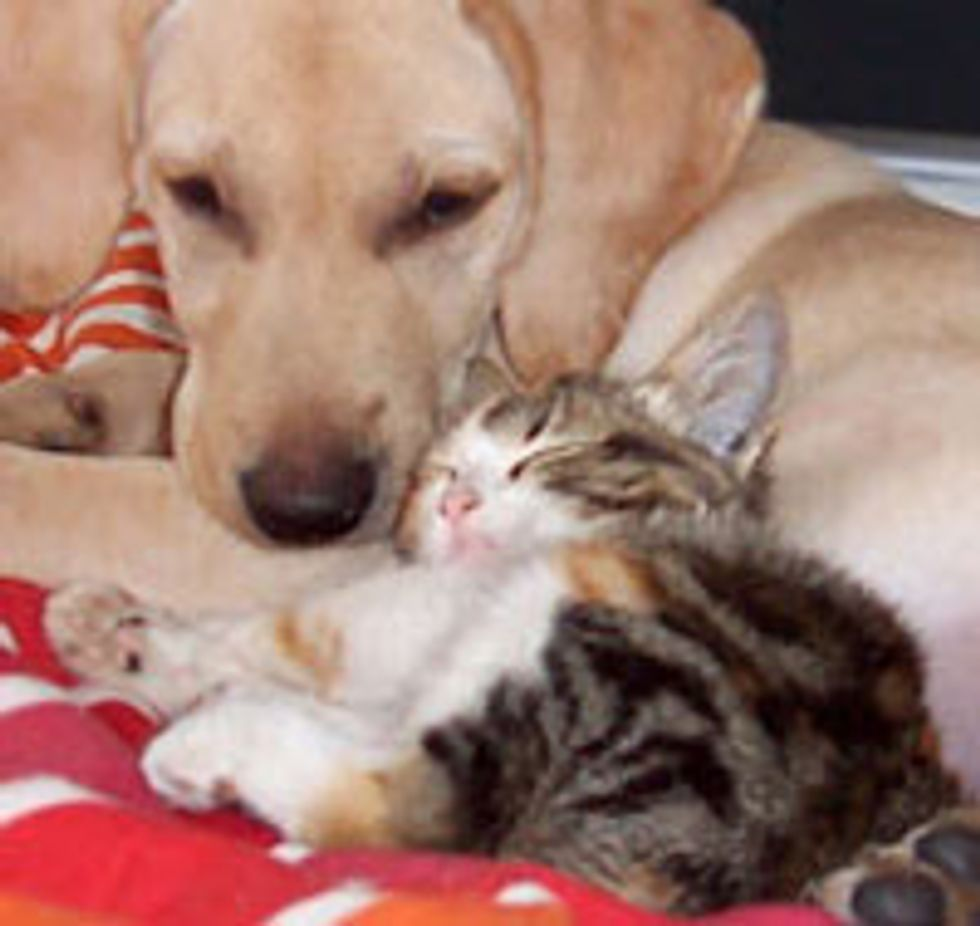 Lovely Friendship Between Kitty and Puppy