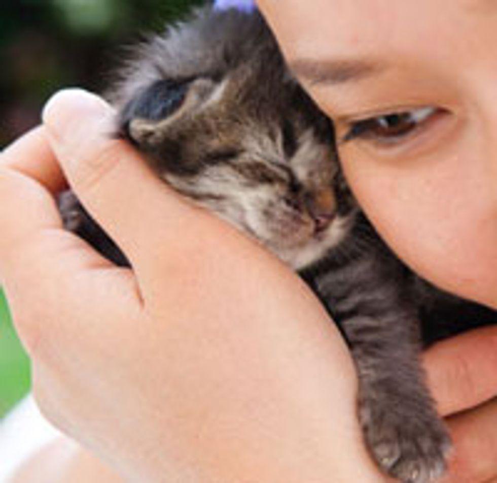 Three Kittens Found in Yard: Ichi, Ni, San