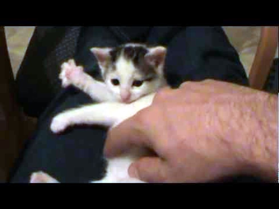 Sweet Little Kitten Playing Invisible Harp