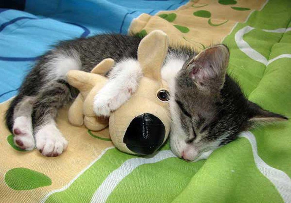Kitten Cuddles with His Doggie Friend