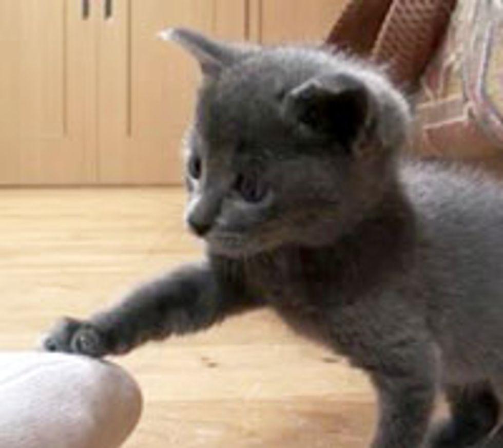 Little Kitten Challenges Big Foot