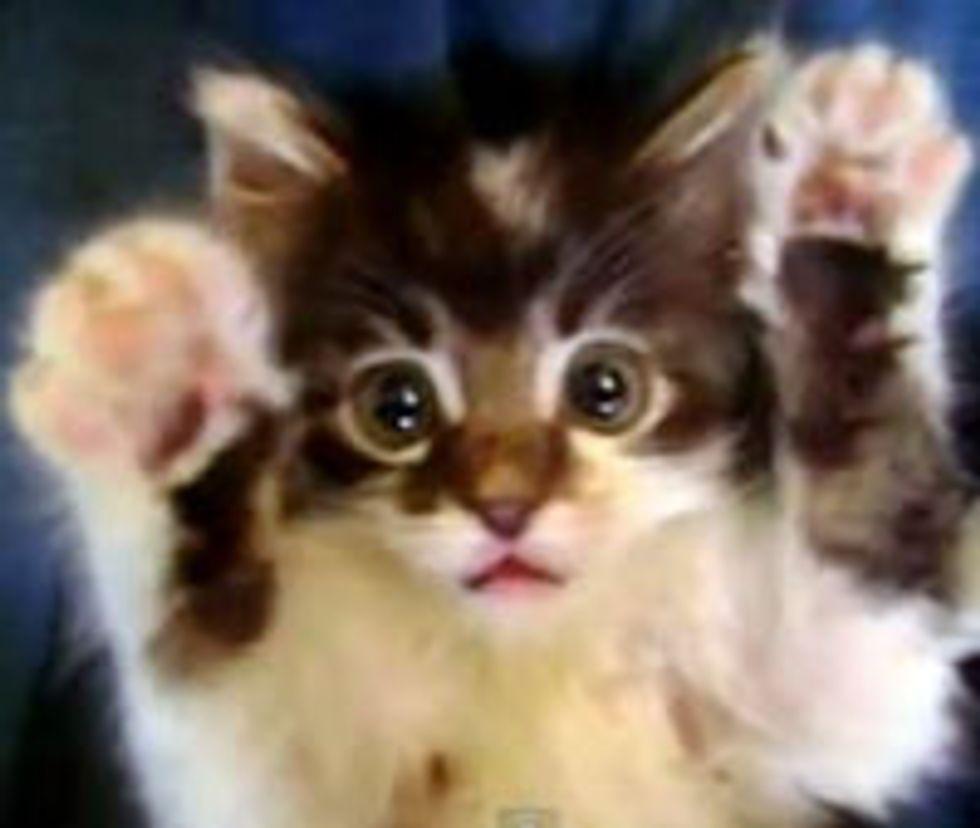 Axel Kitty Surprise!
