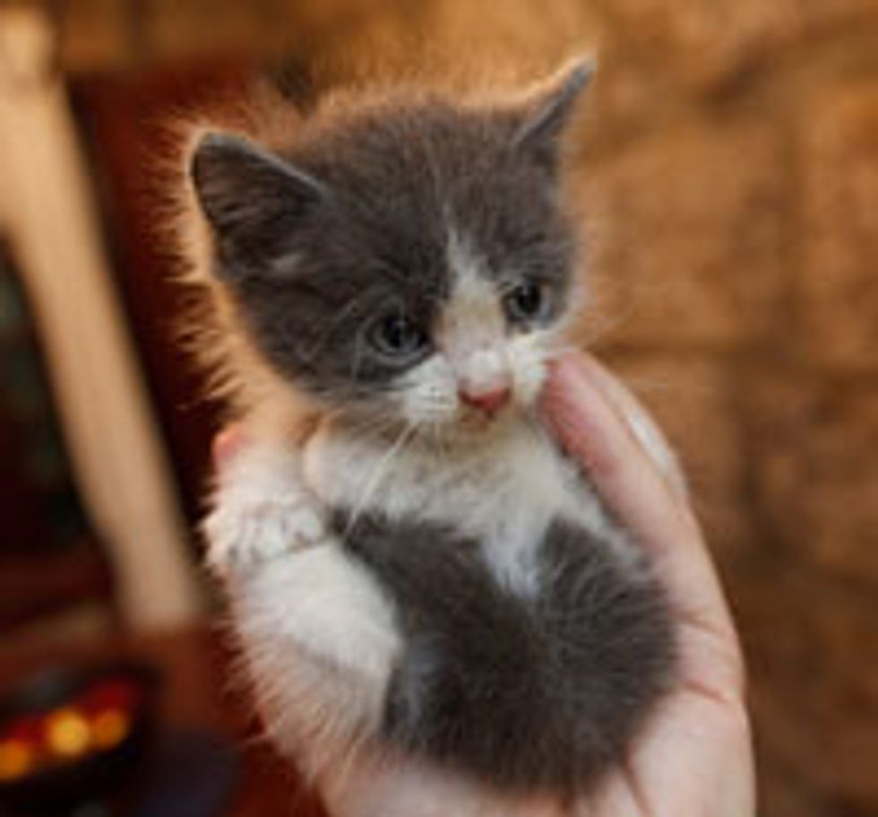 Tiny Fuzzy One
