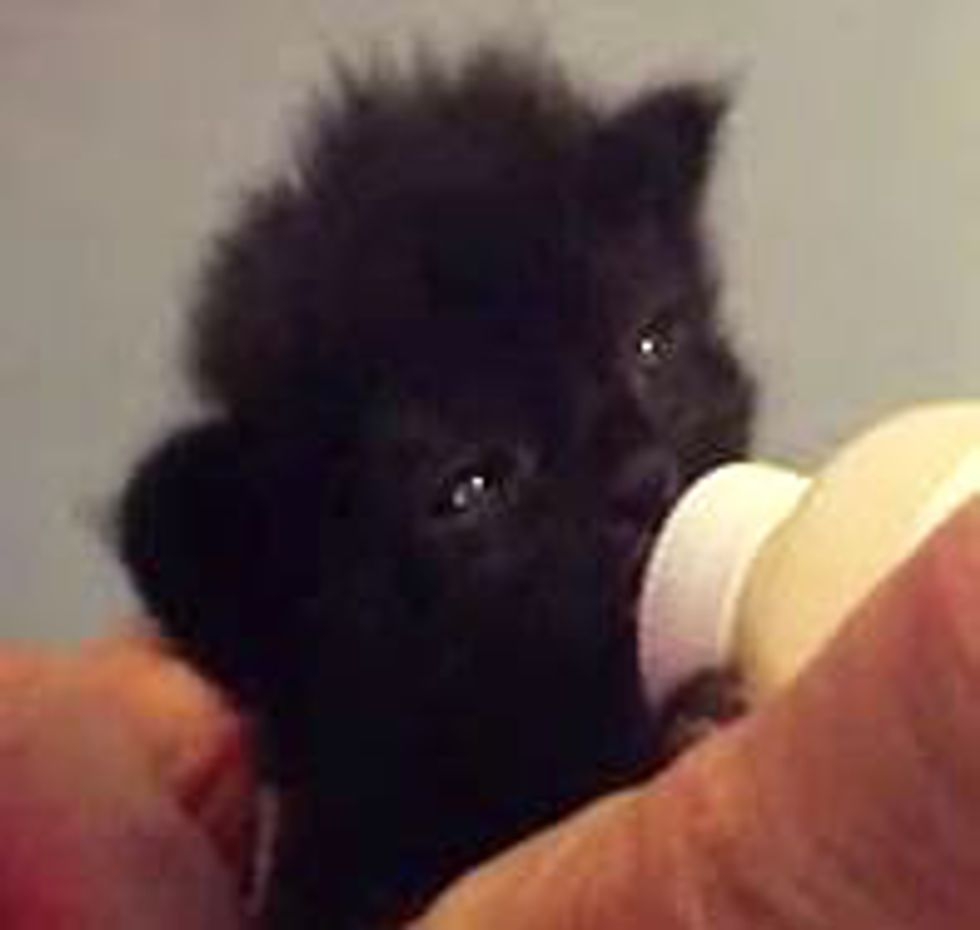 Kitten Drinks Bottle with Ear Wiggles