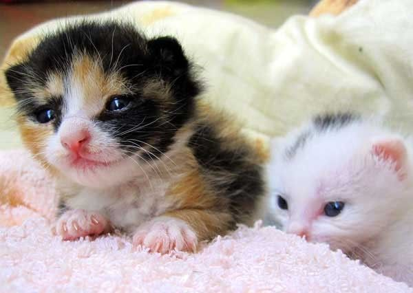 2 Itty Bitty Kitties Found Second Chance at Life - Love Meow