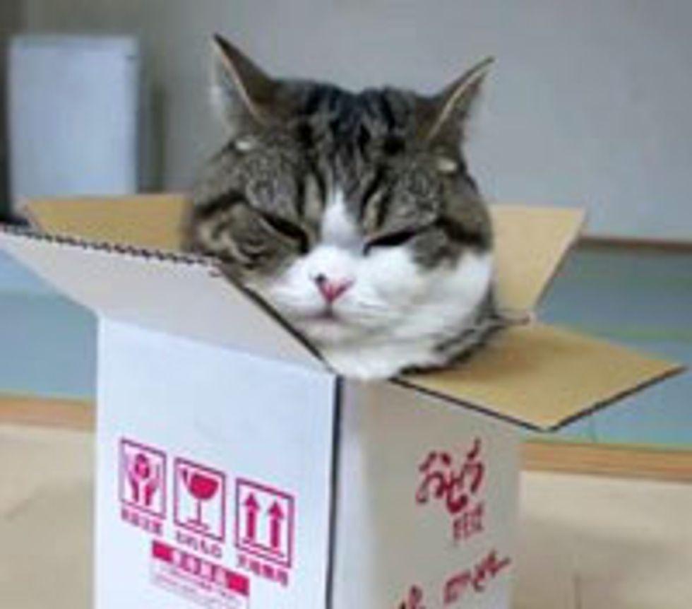 Maru's Love for a Small Box