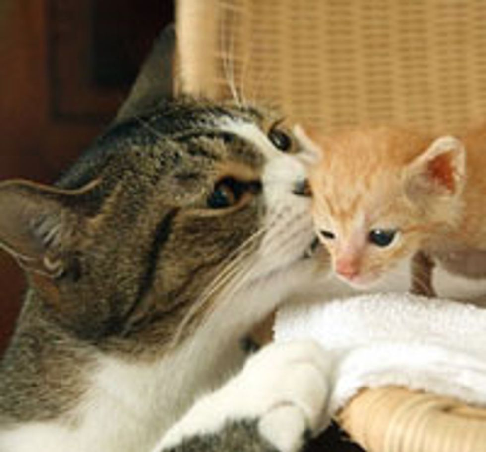 6 Amazing Stories of Fatherly Cats