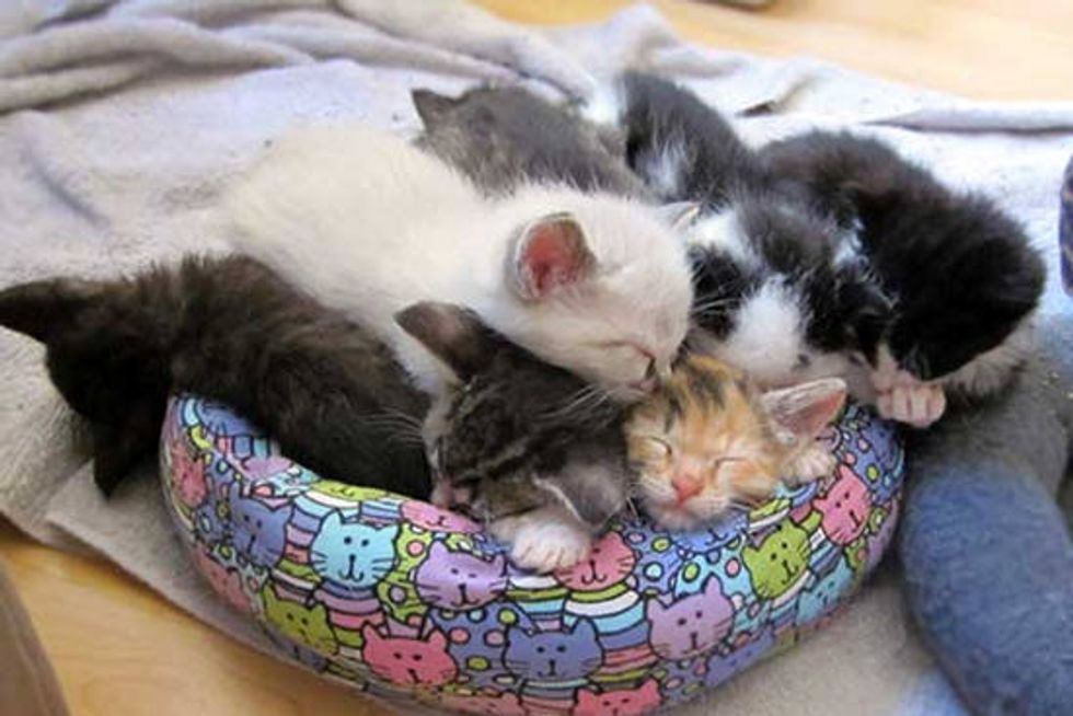 Itty Bitty Kitties in Their Tiny Beds