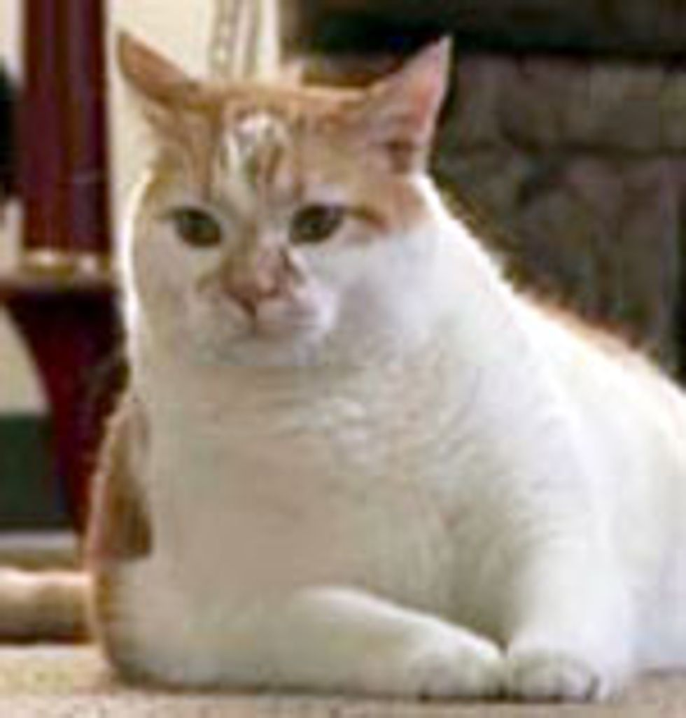 Rusty the Cat Saves Life of Owner