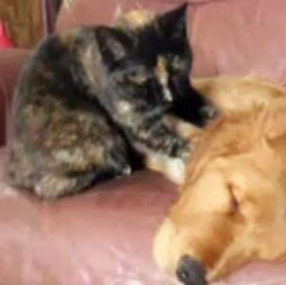 Kitty Gives Doggie Buddy a Neck Massage