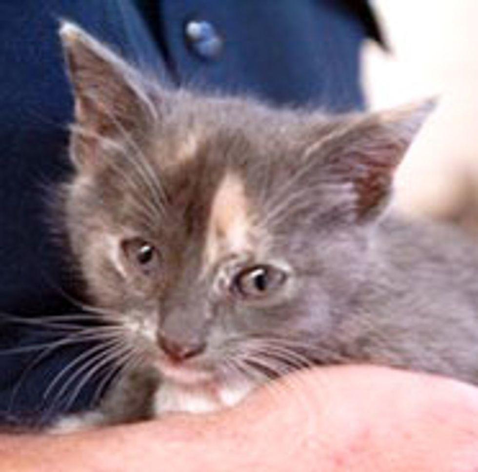 Firefighters Rescue Kitten From Rusty Pipe