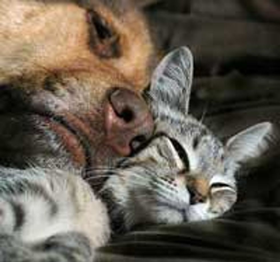 Rescue Kitty Finds Motherly Love from Doggie Friend