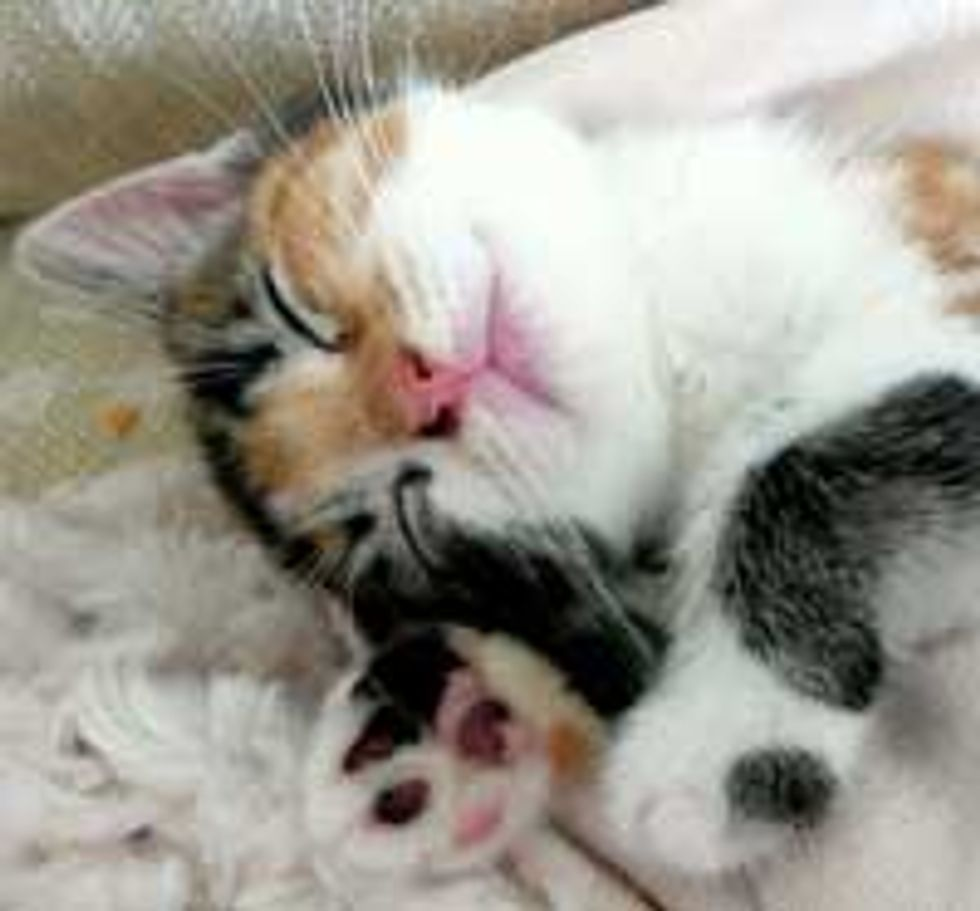 Nala the Calico Finds Love and Home