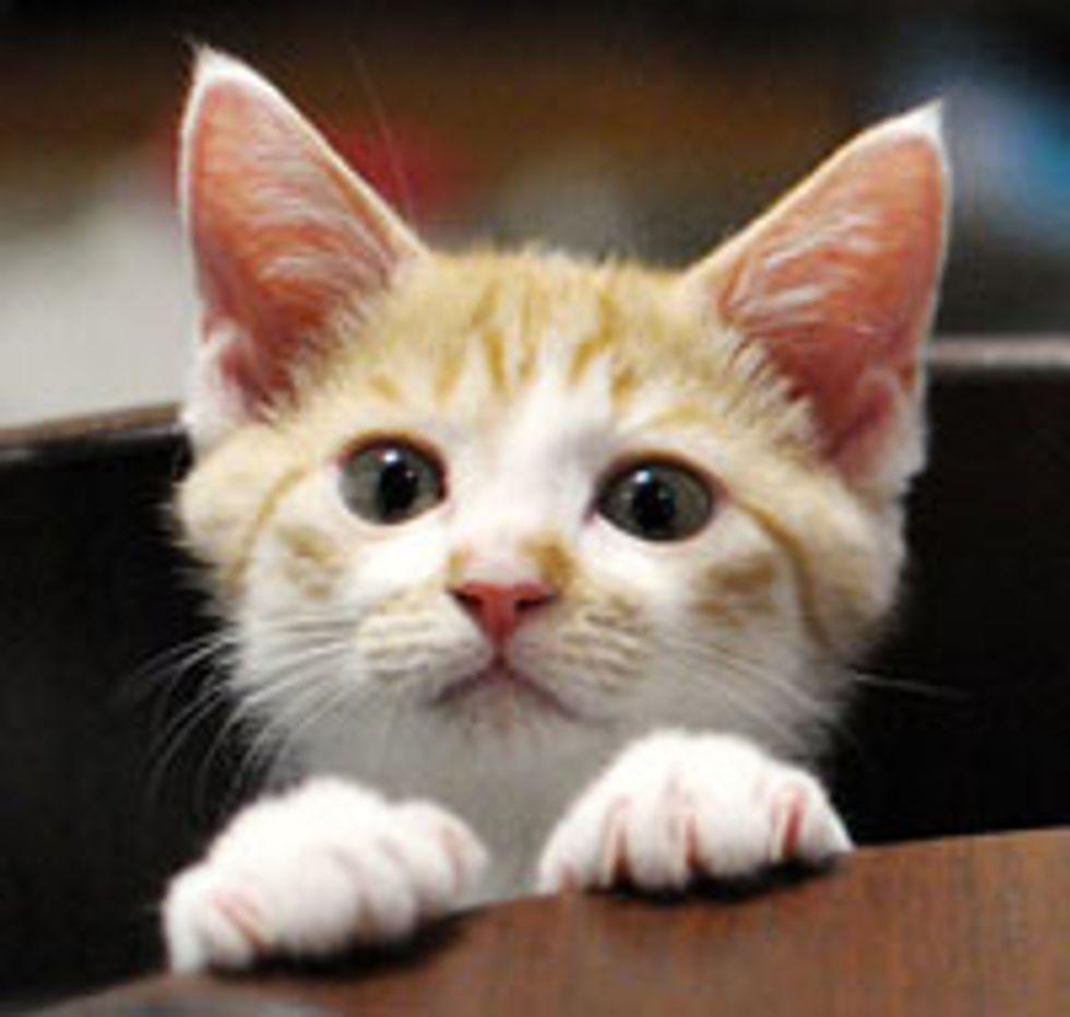 Mischievous Kitten, Kotetsu