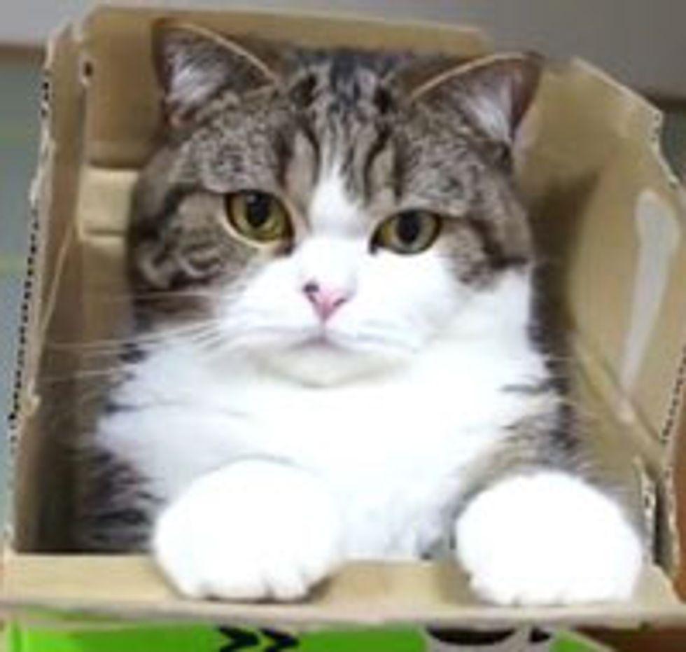 Maru Plays in a Box
