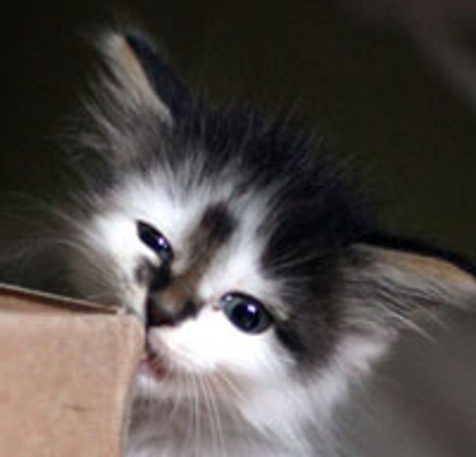 Tiny Kitten with a Big Heart