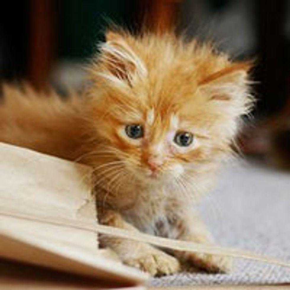 Barney the Einstein Kitty