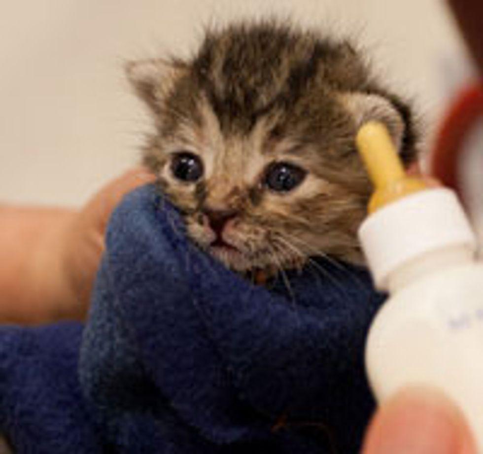 Tiny Bottle Kitten