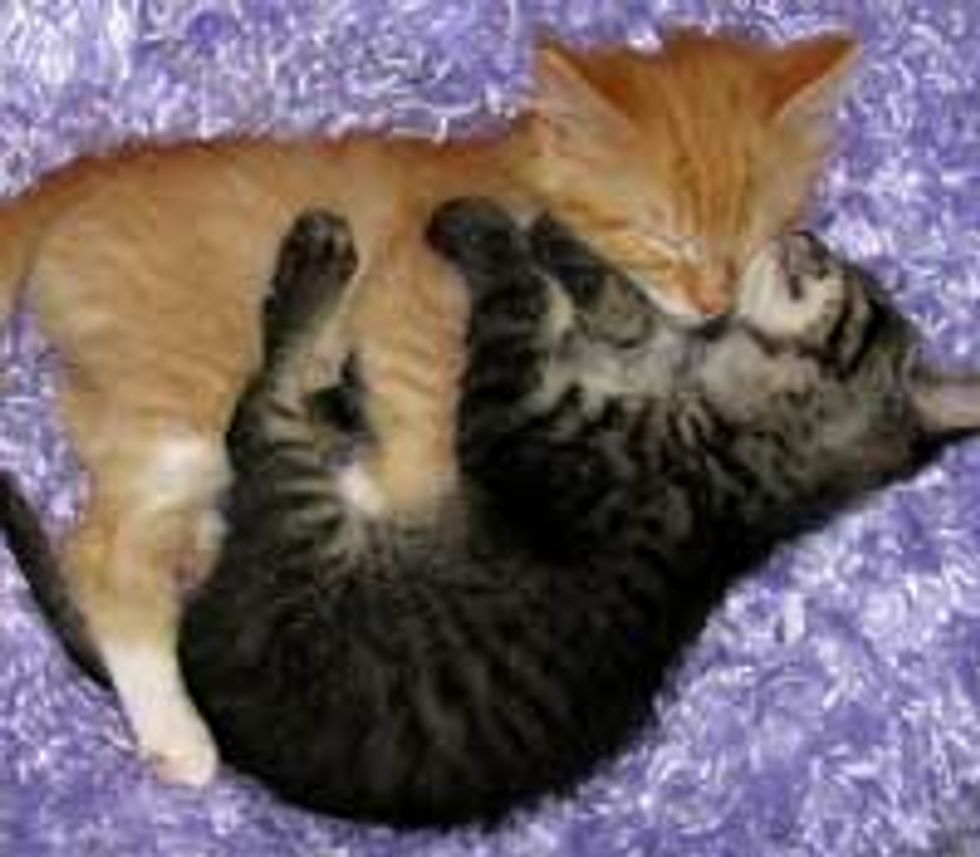 Napping into a Cuddle