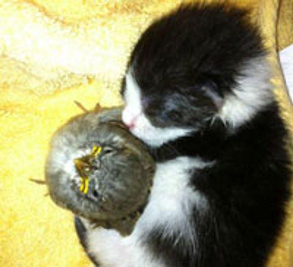 Kitten Snuggling with Little Birdie