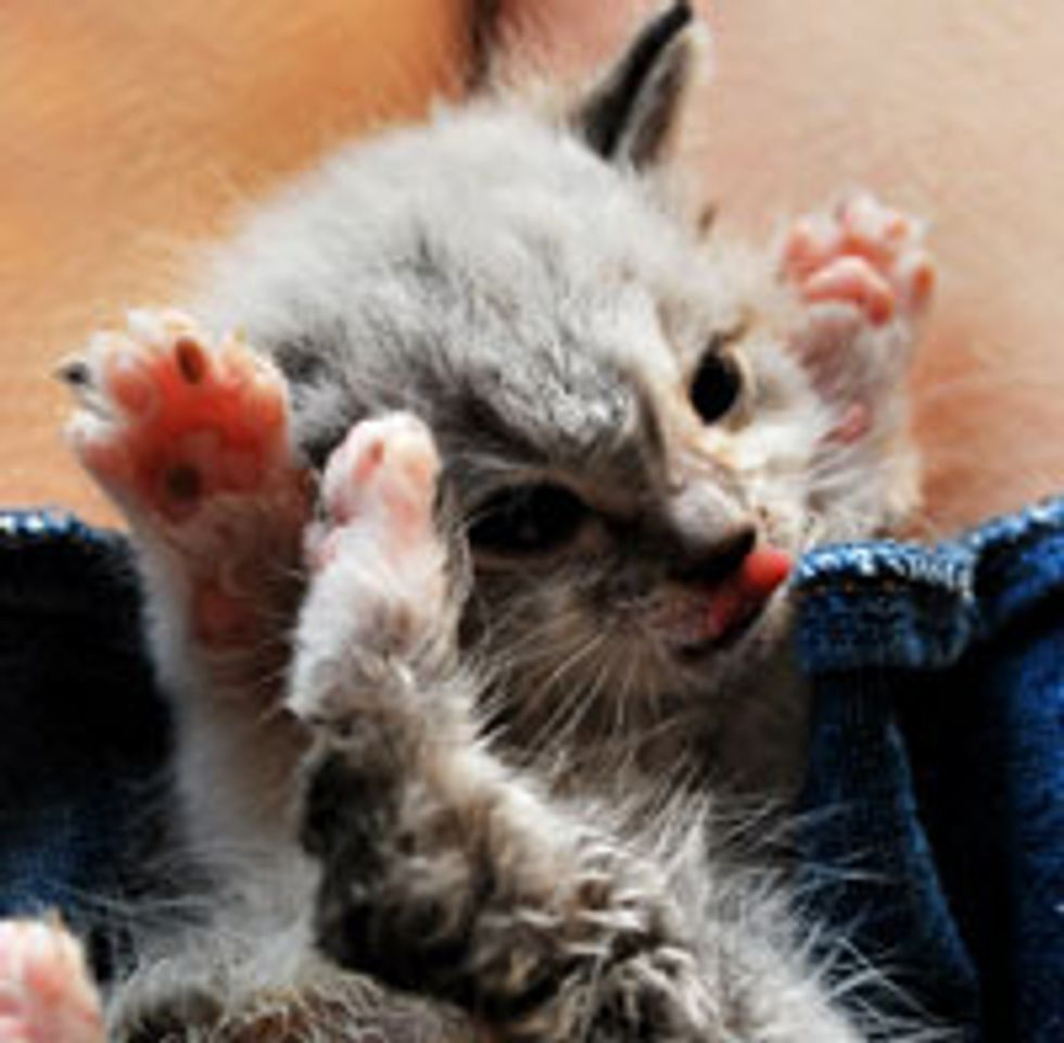 Paws in the Air!