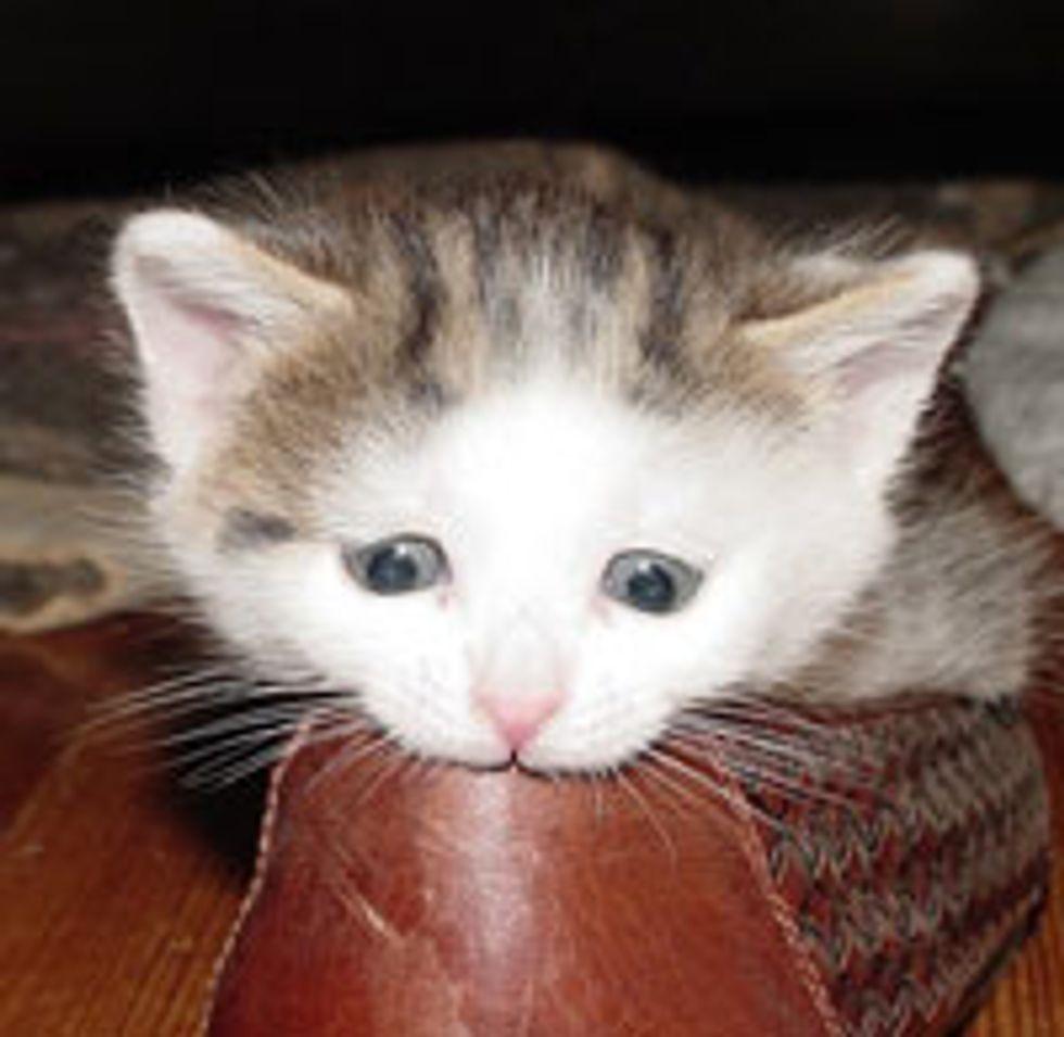 Kitty Nom Noms Shoe