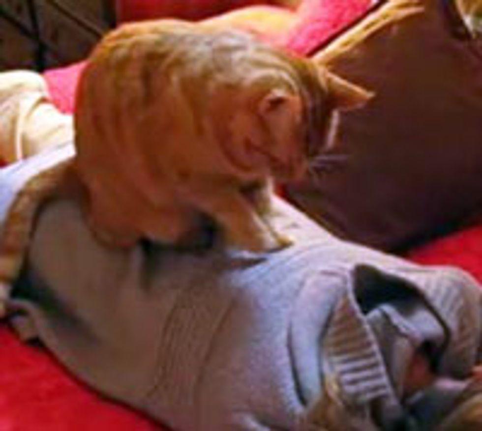Kitty Gives Human a Back Massage