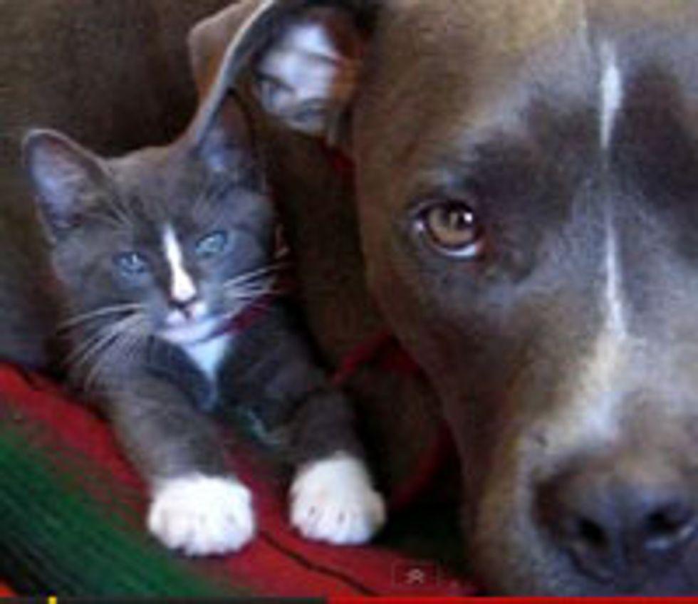 Kitty and Doggie, Matching Buddies