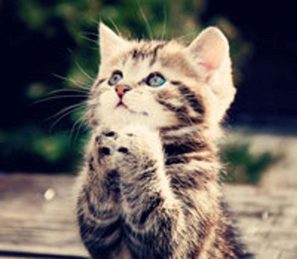 Kitty Makes a Wish