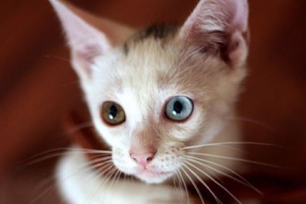 Little White Rescue with Blue and Hazel Eyes