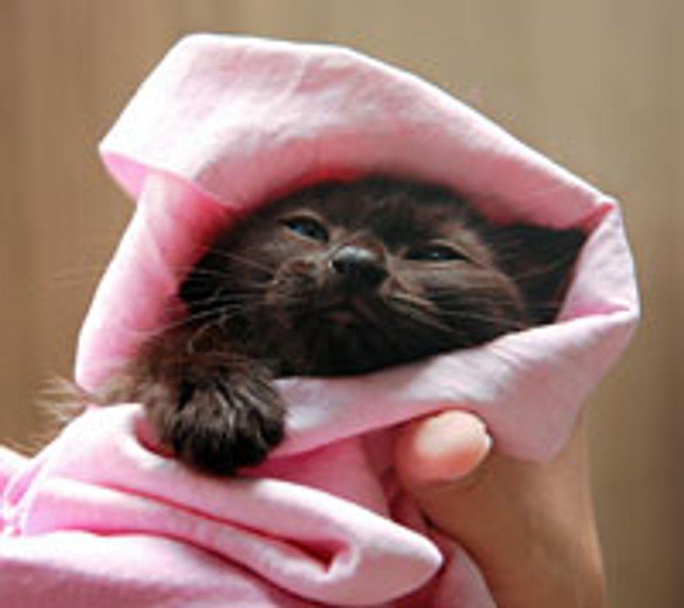 Kitten from the Rain