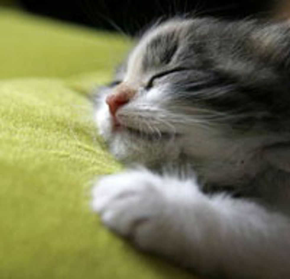 Sleepy Caturday!