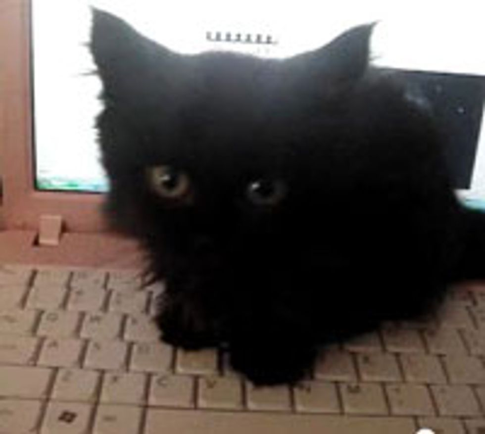 Kitty Typing on Computer