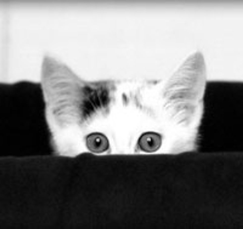 Peekaboo Kitty