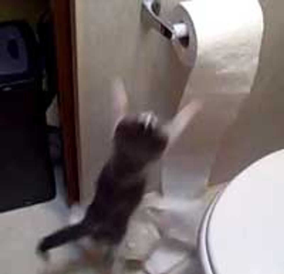 When Kitties Discover Toilet Paper